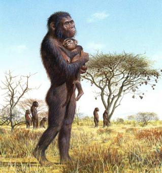 australop